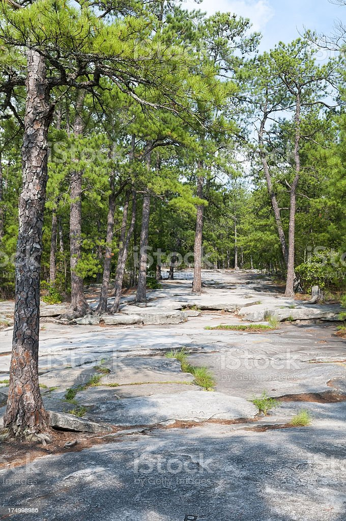 Pine forest on Stone Mountain royalty-free stock photo