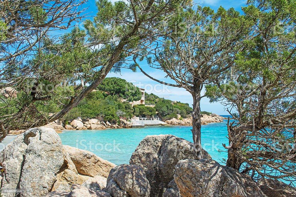pine trees in Capriccioli stock photo