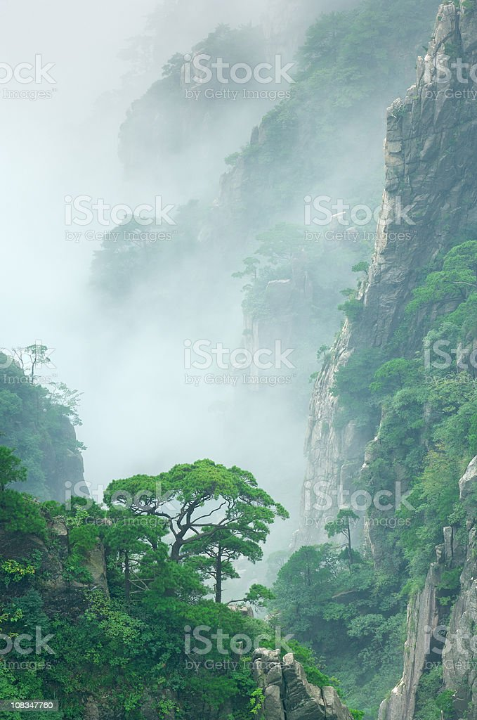 pine trees in cloud on Mount Huangshan stock photo