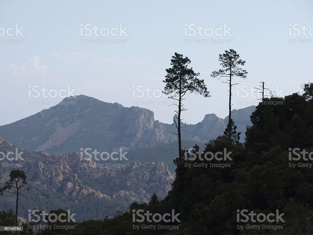 Pine trees in the esterel mountains near cote d'azur royalty-free stock photo
