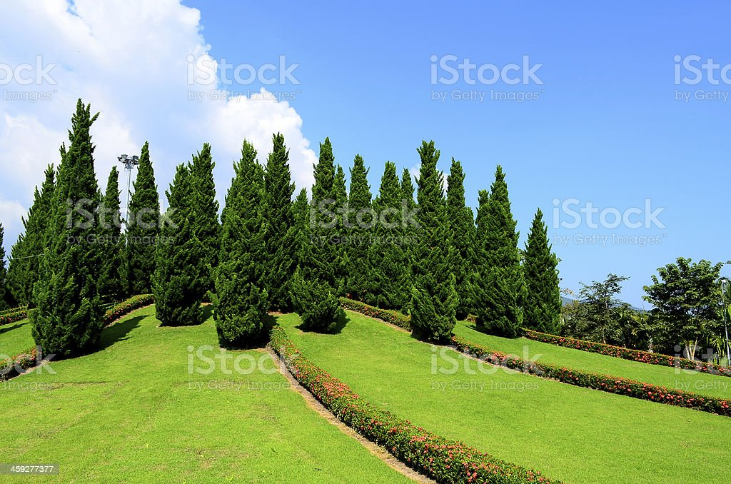 Pine Trees in the Formal Garden royalty-free stock photo