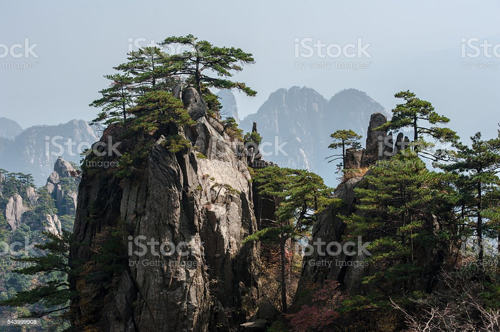Pine trees on cliff edge, Huangshan Mountain Range in China stock photo