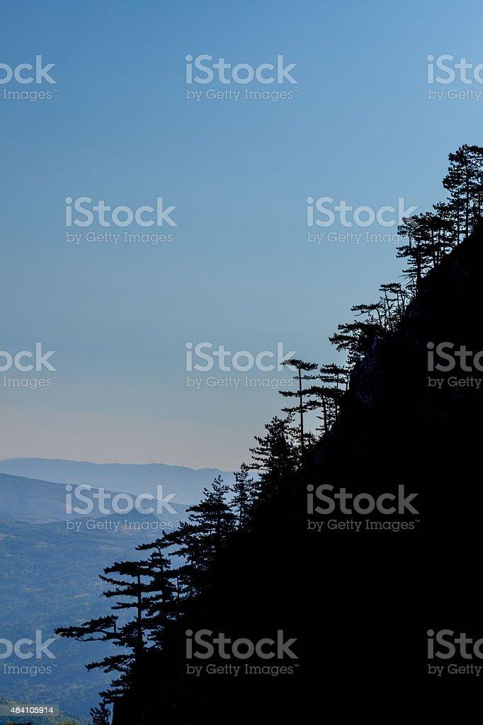 Pine trees on cliff stock photo