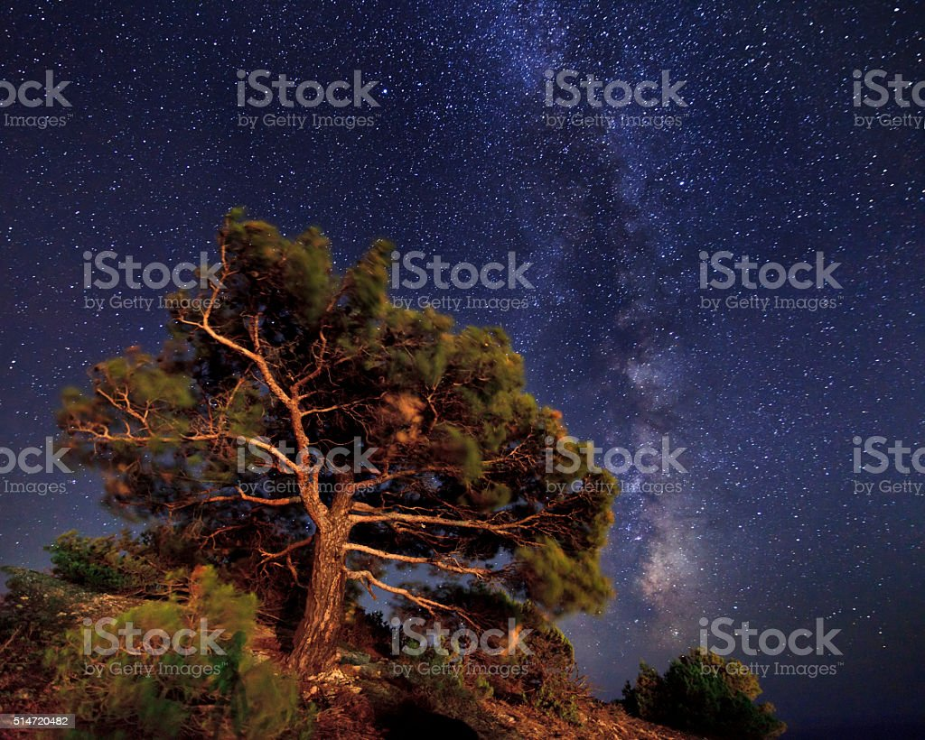 Pine trees on the background of an amazing night sky. stock photo