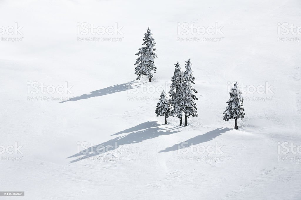 Pine Trees On White Field stock photo