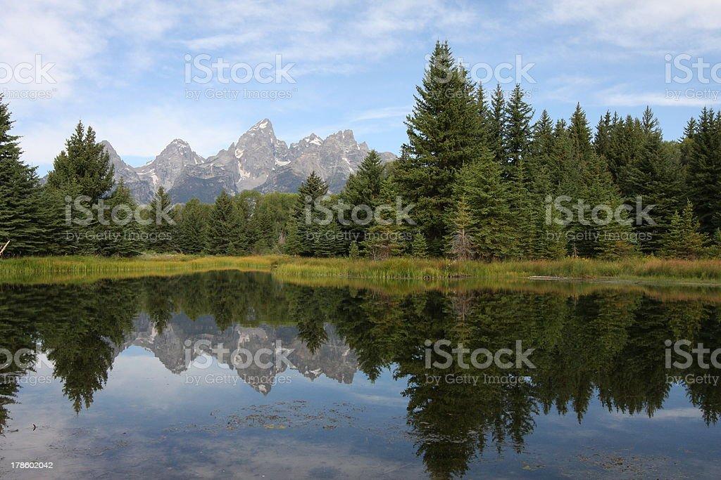 Pine Trees Reflecting stock photo
