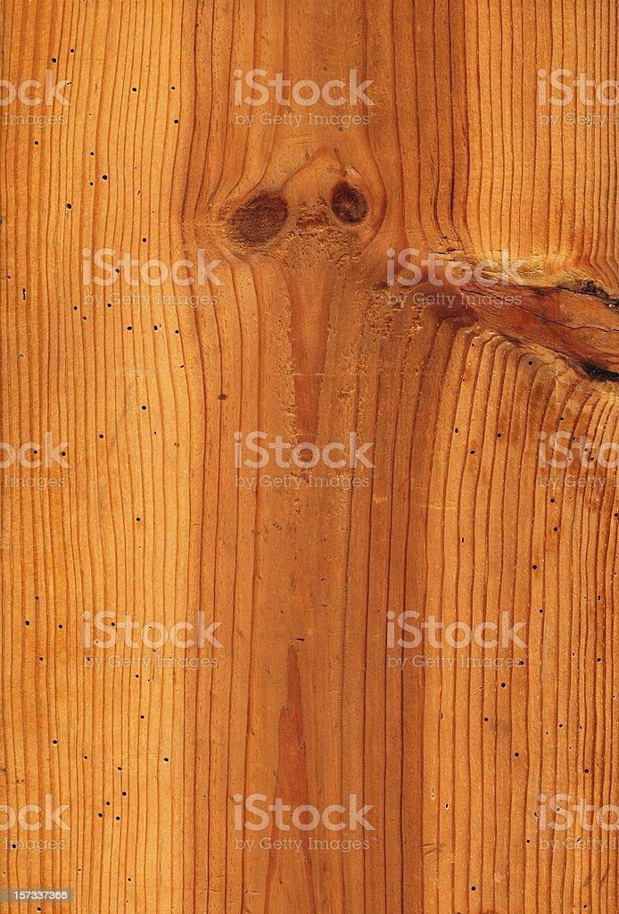 Pine wood damaged by termites XXXL royalty-free stock photo