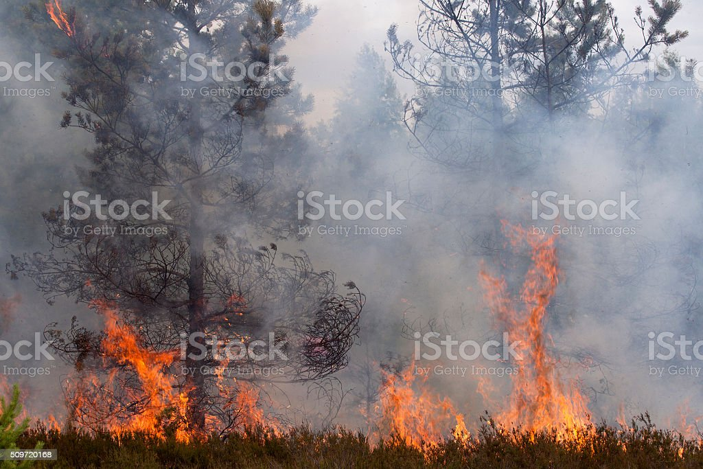 Pine wood fire stock photo