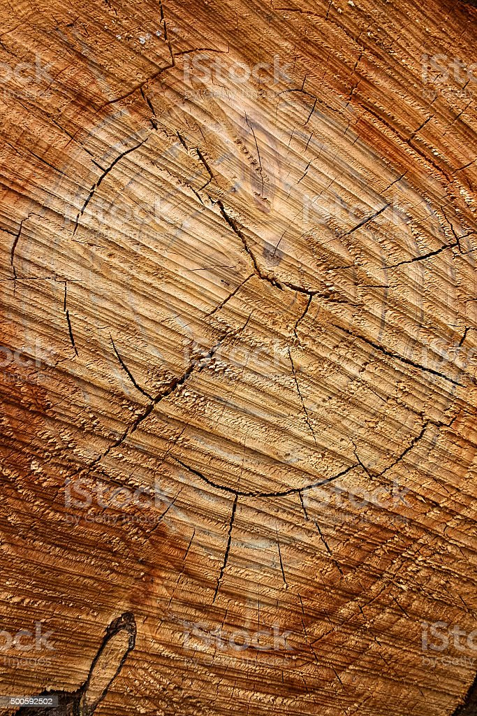 Pine wood grain patterns and rings. stock photo