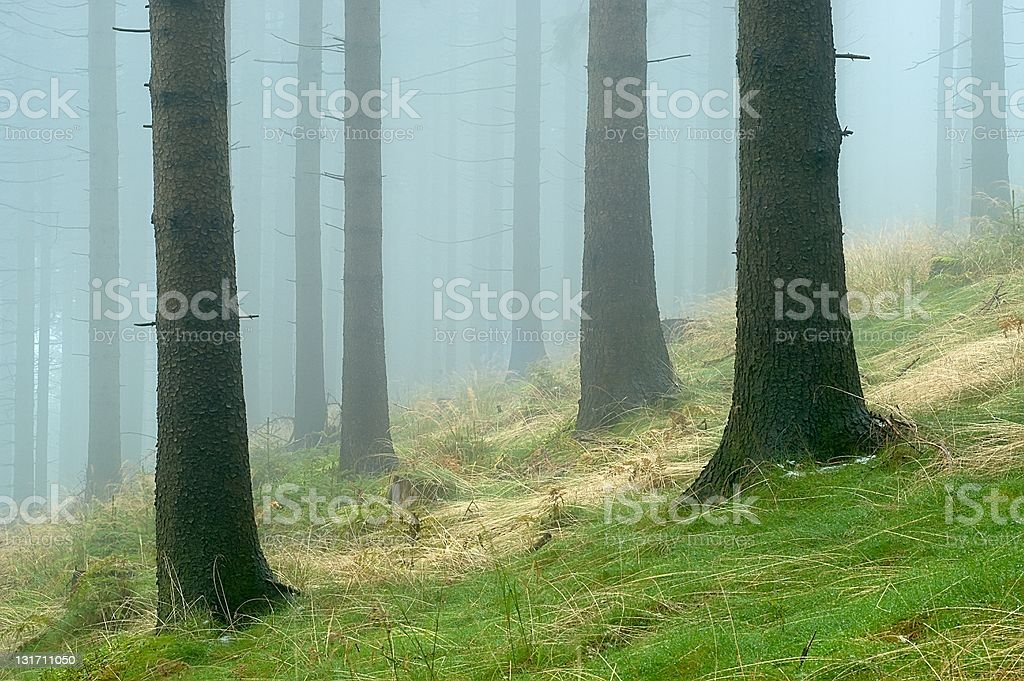 Pine - wood stock photo