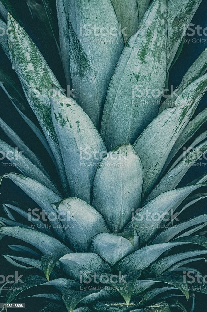 Pineapple Crown stock photo