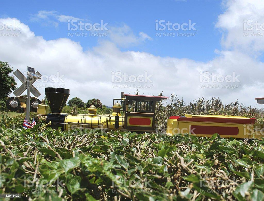 Pineapple Express at the Dole Plantation, Oahu, Hawaii royalty-free stock photo