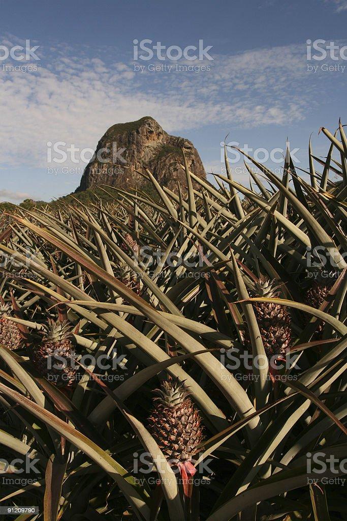 Pineapple Farm & Mt Tibrogargan royalty-free stock photo