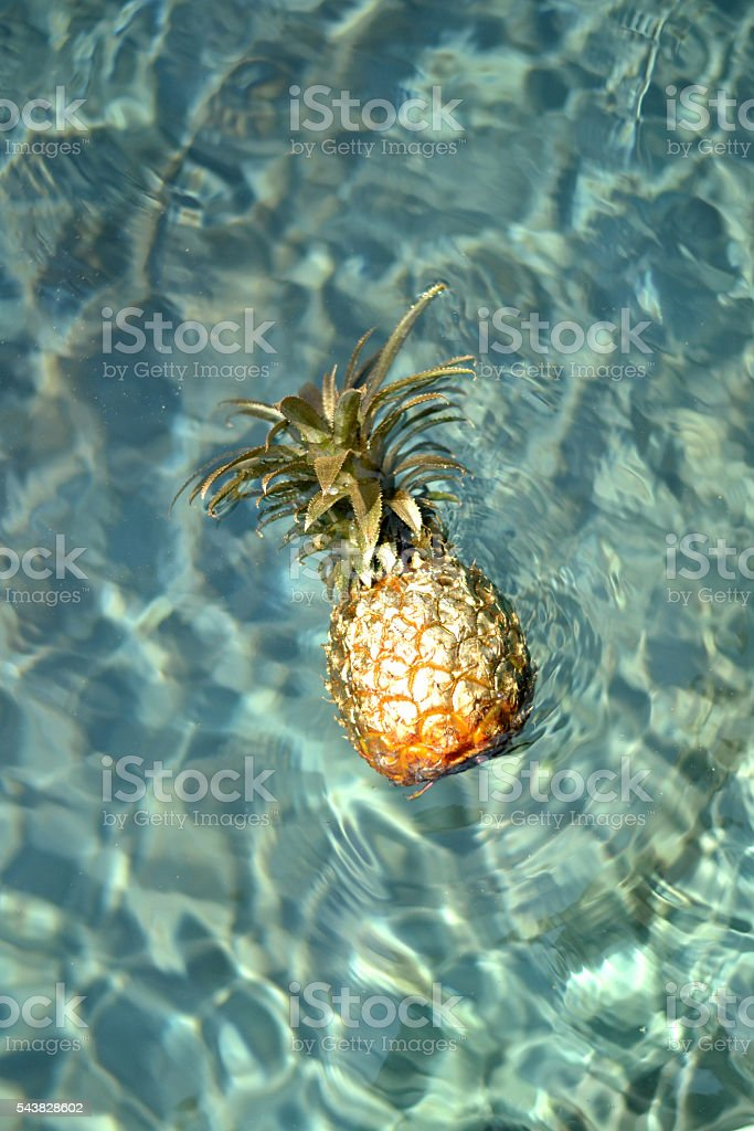 Pineapple in pool stock photo