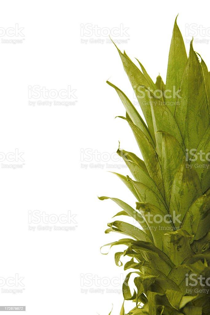 pineapple leaves on white stock photo