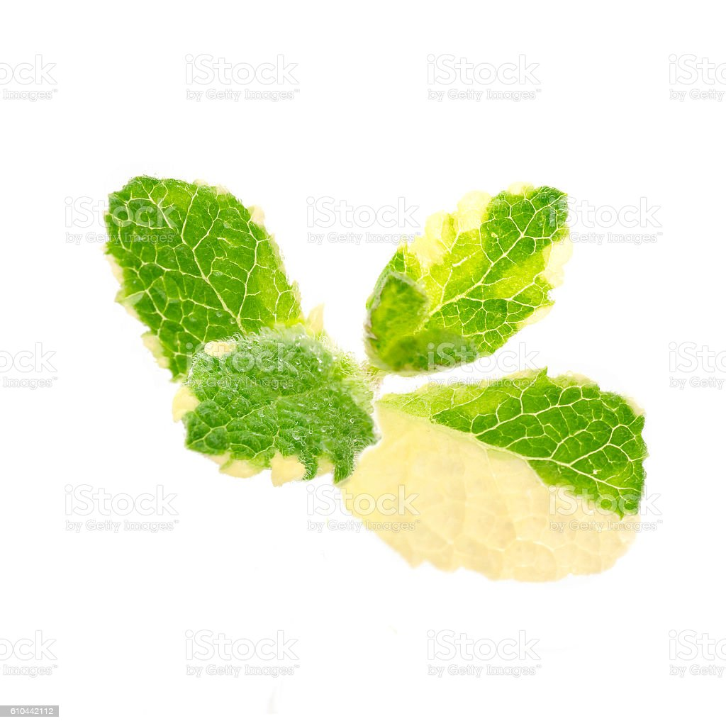 pineapple mint on a white background stock photo