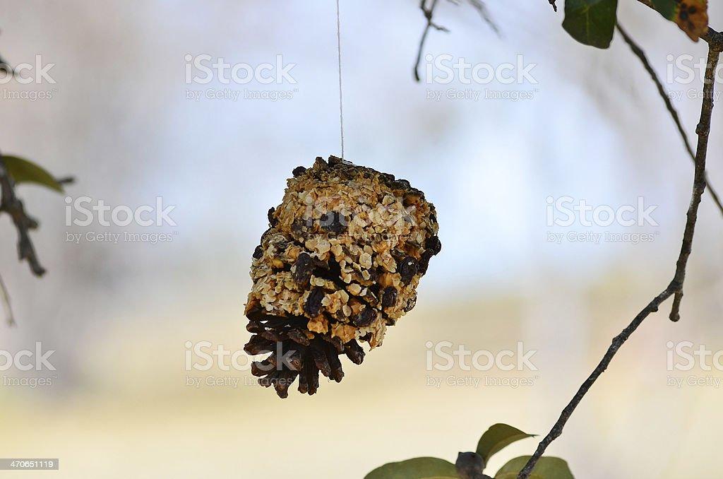 Pinecone Bird Feeder stock photo