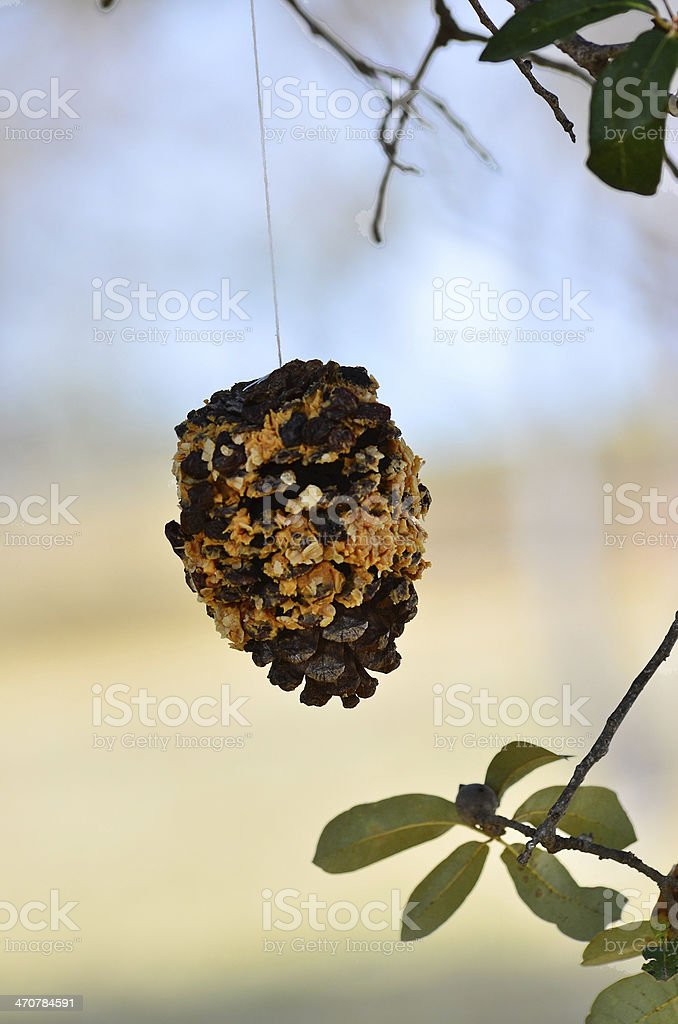 Pinecone Bird Feeder (vertical) stock photo