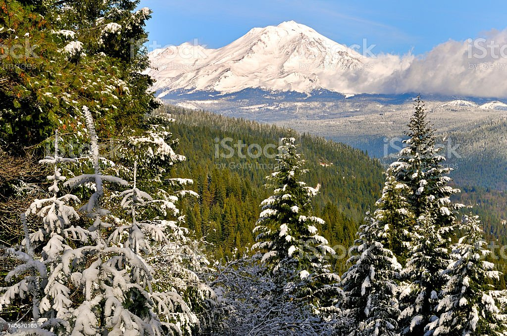 Pines and Mt. Shasta in Snow, Northern California royalty-free stock photo