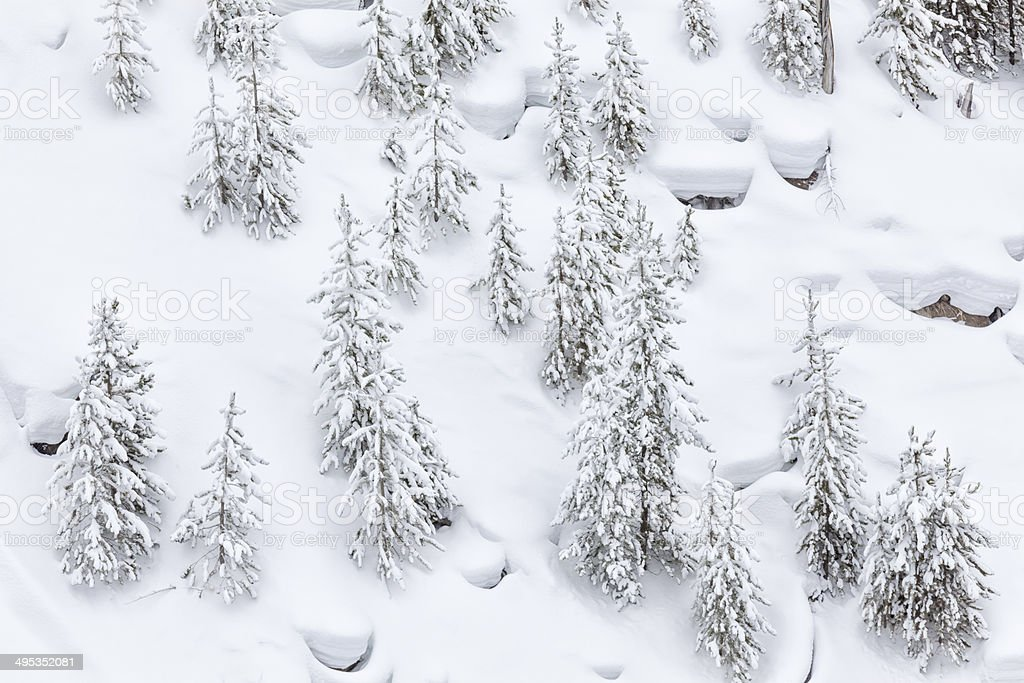 Pines in Winter Snow royalty-free stock photo