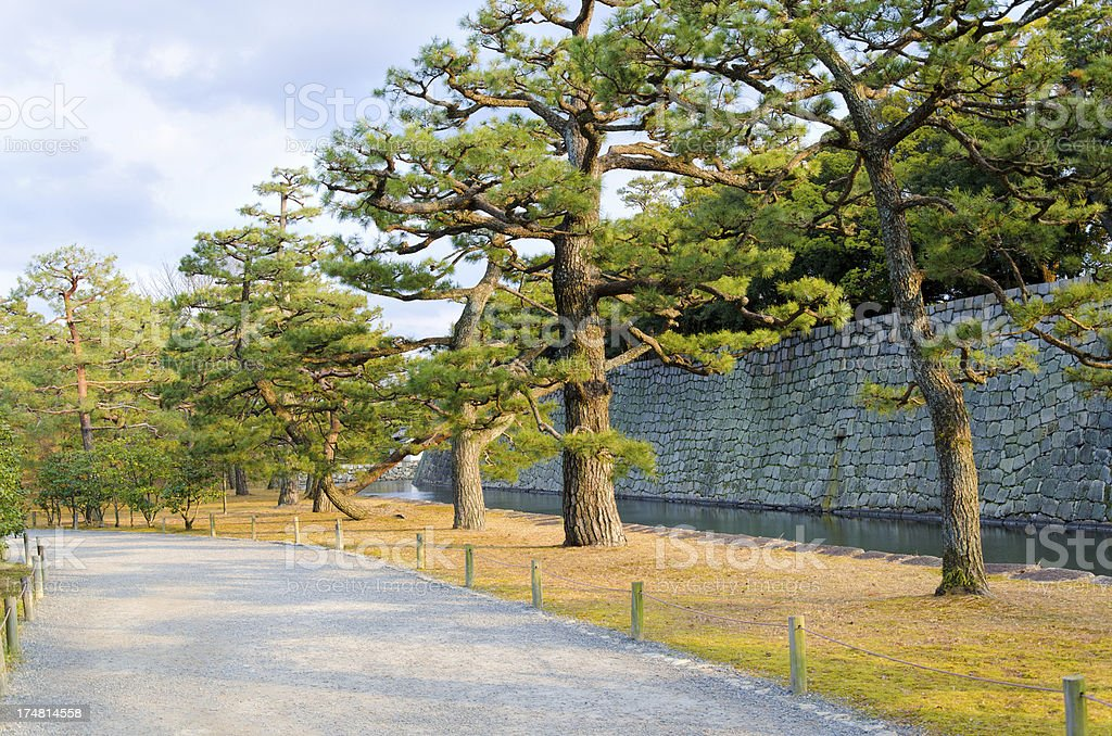 Pines near the castle in Kyoto royalty-free stock photo