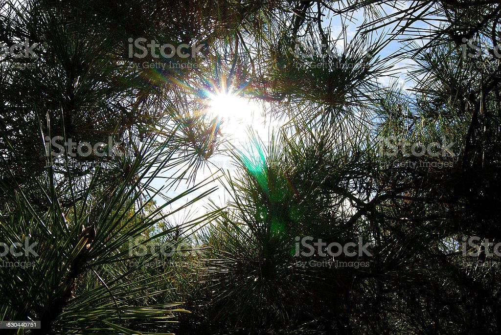 Piney View royalty-free stock photo
