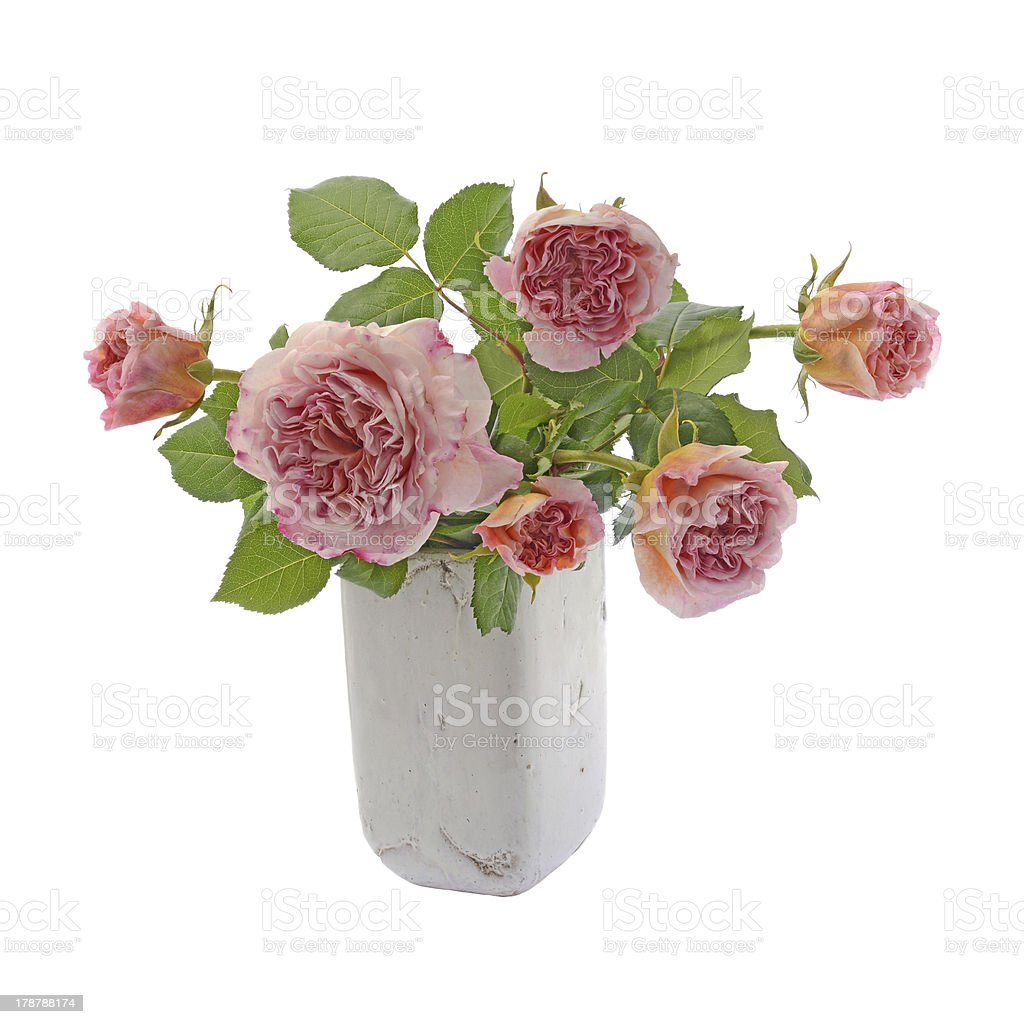 Pink and cream roses in vase royalty-free stock photo