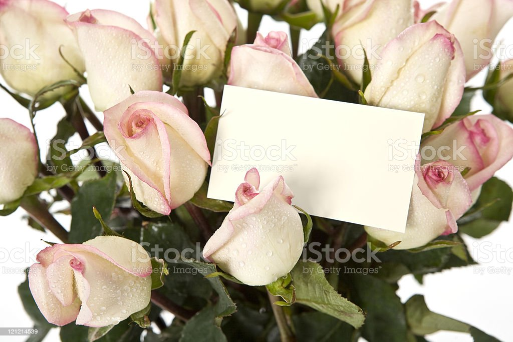 Pink and Cream Roses stock photo