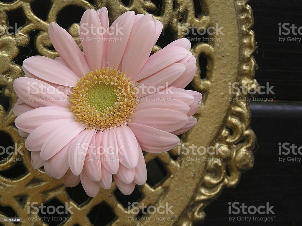 pink and gold royalty-free stock photo