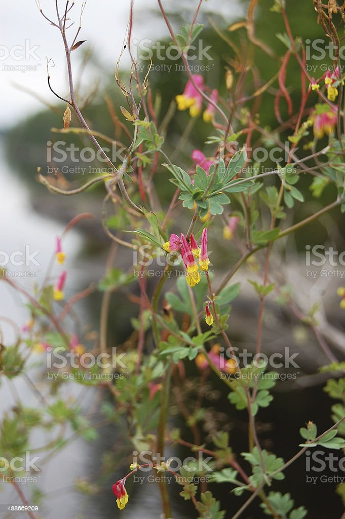 pink and gold wildflower royalty-free stock photo