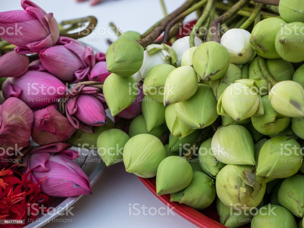 Pink and green lotus flowers stock photo