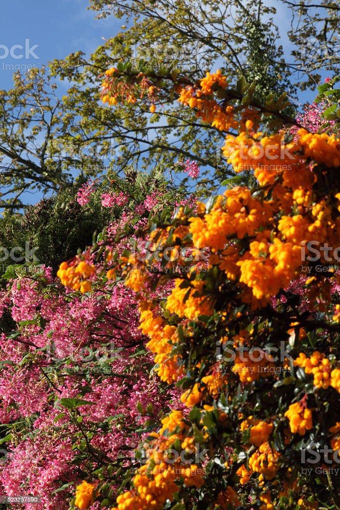 Pink and orange stock photo