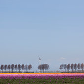 pink and orange tulips with trees plus wind turbine