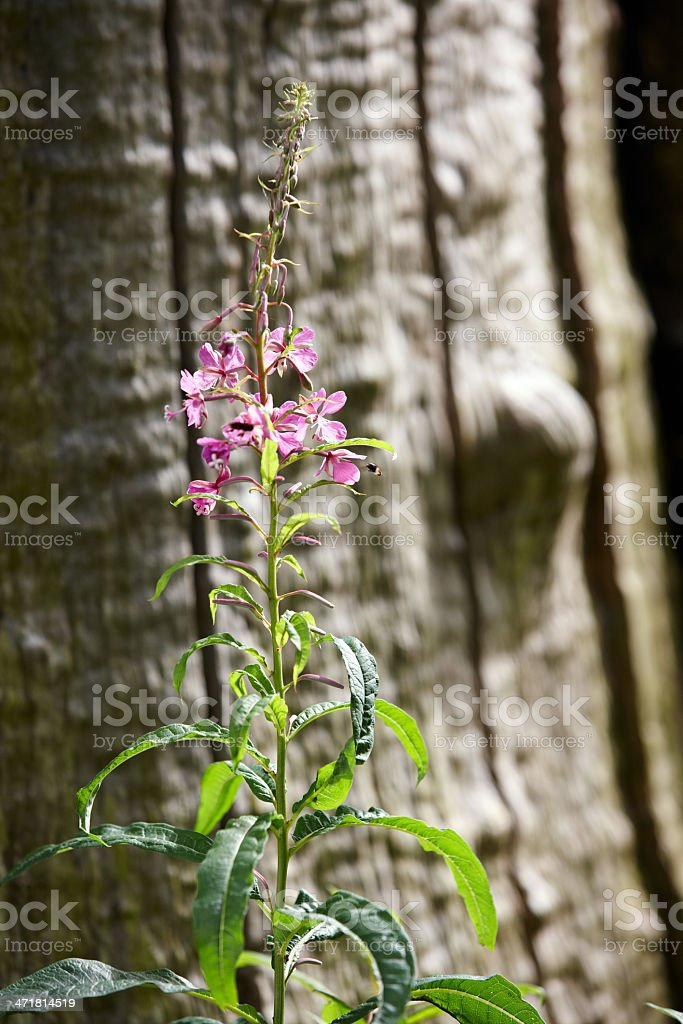 Pink and Purple wildflowers in close-up royalty-free stock photo