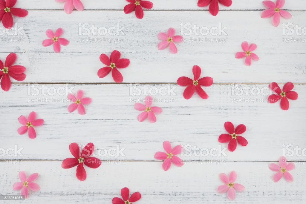 Pink and red flowers pattern on white wood background stock photo