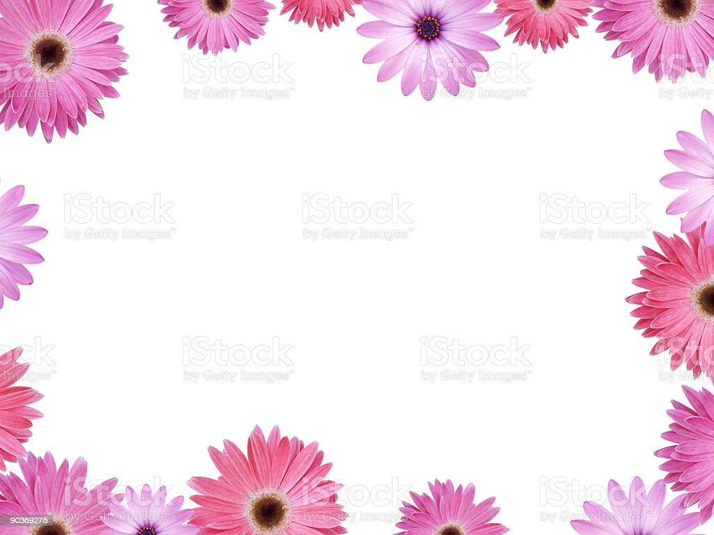 Pink and Violet flower frame with copyspace XXL stock photo