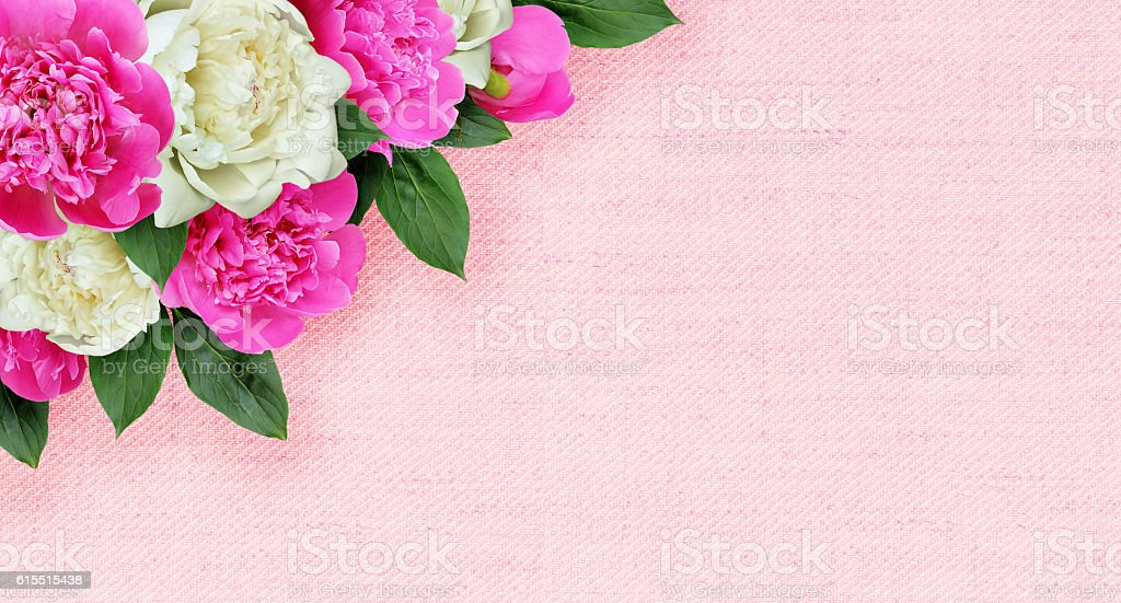 Pink and white peonies flowers corner arrangement on canvas stock photo
