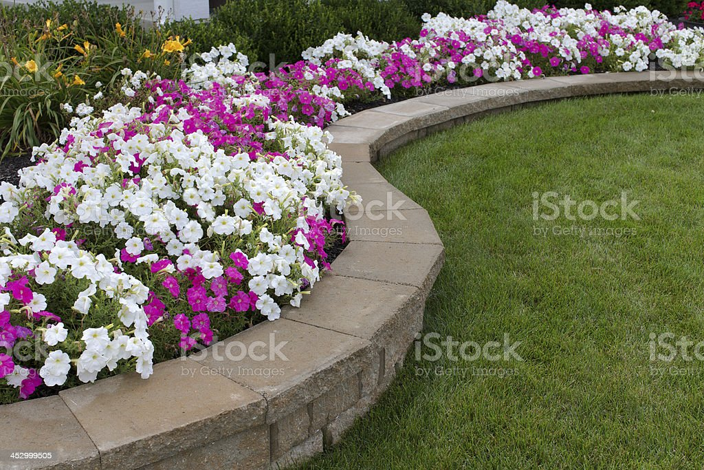 Pink and White Petunias stock photo