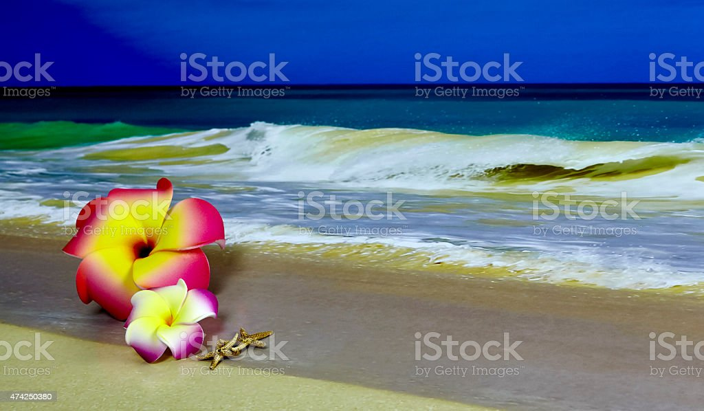 Pink and Yellow Plumerias on the Beach with Starfish stock photo
