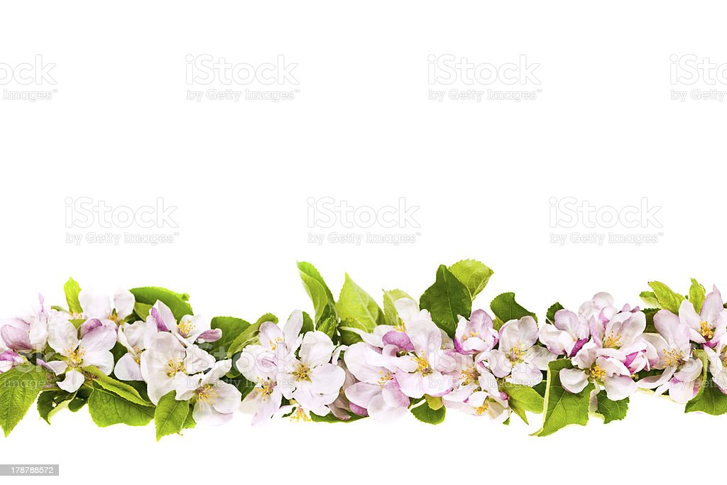 Pink apple blossoms border royalty-free stock photo