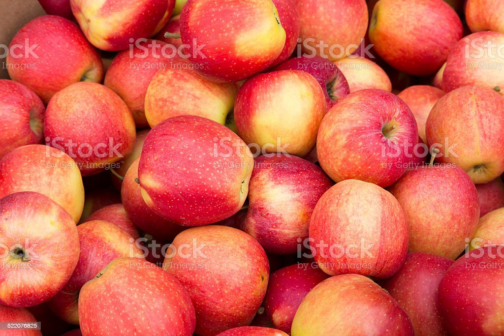 Pink Apples stock photo