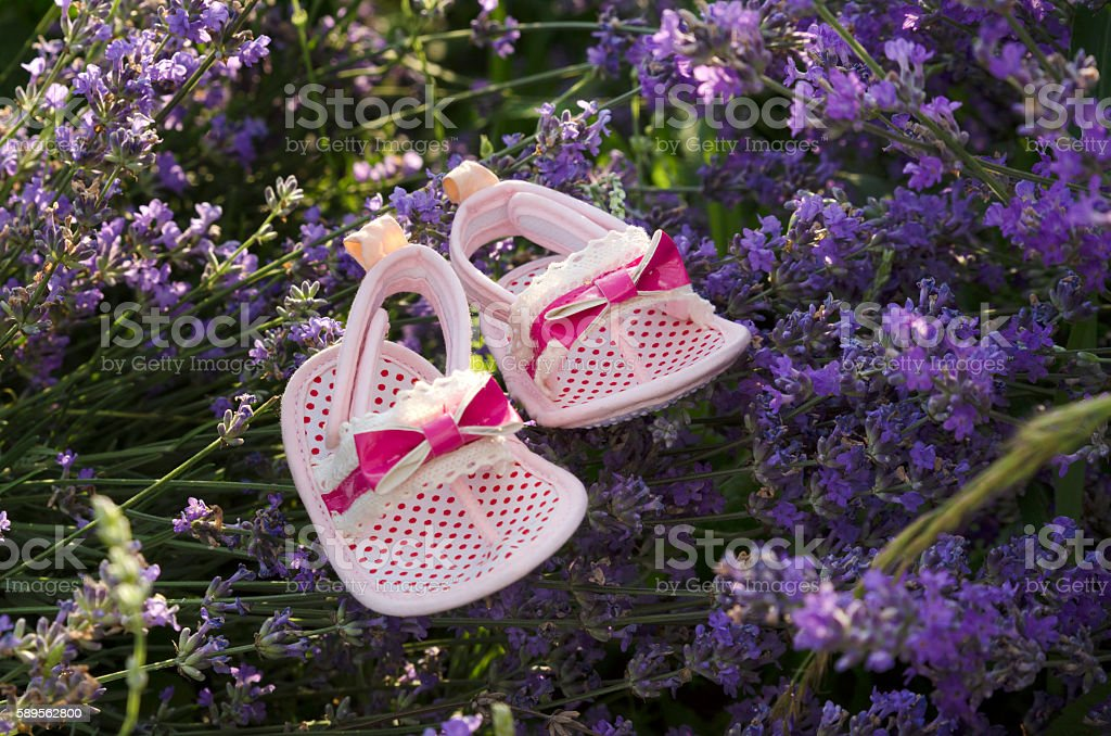 Pink baby girl shoes in lavender field stock photo