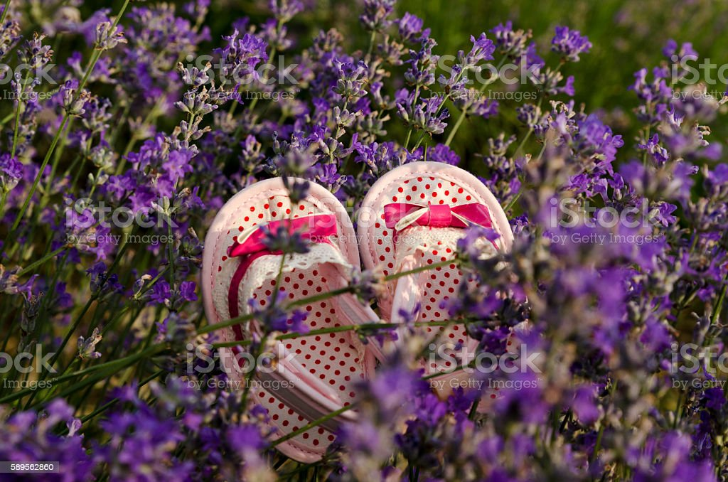 Pink baby shoes in lavender field stock photo