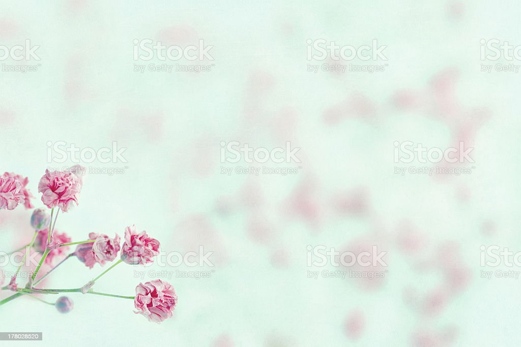 Pink baby's breath flowers with copy space royalty-free stock photo