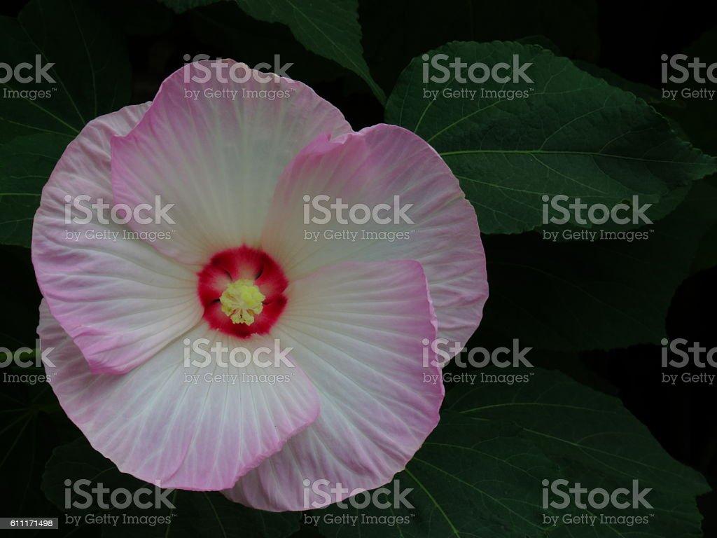 Pink beauty stock photo