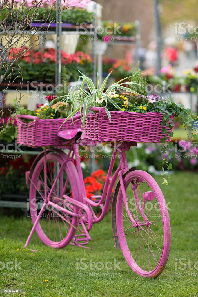 pink bicycle with colorful flower pots - decoration stock photo