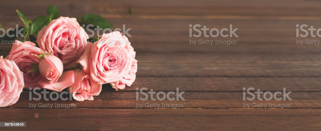 Pink blooming roses stock photo