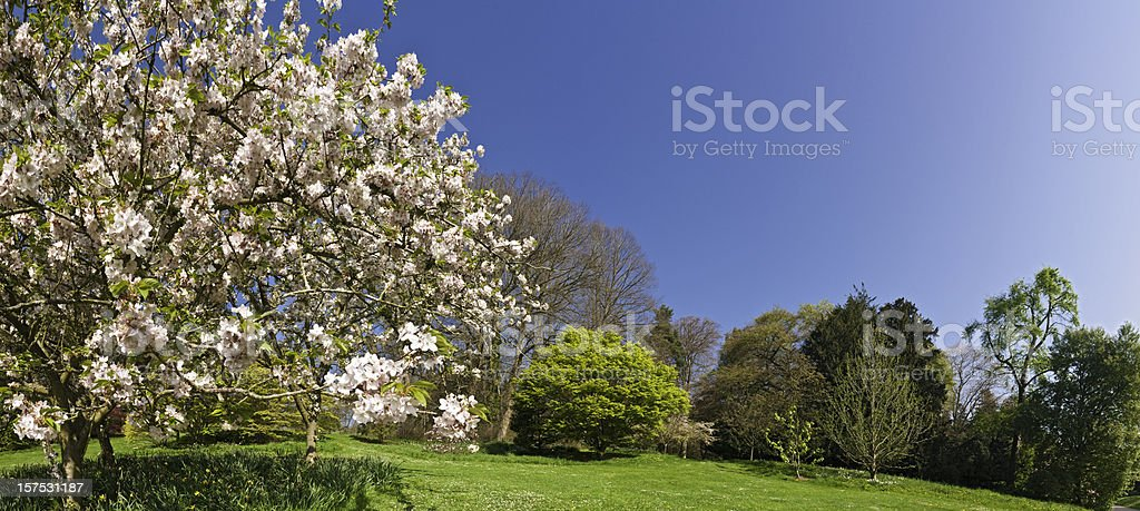 Pink blossom blooming lush green spring gardens panoramic blue sky royalty-free stock photo