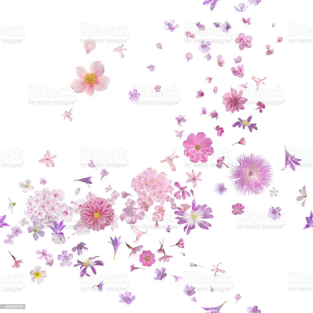 Pink Blossom Flower Buds Breeze stock photo