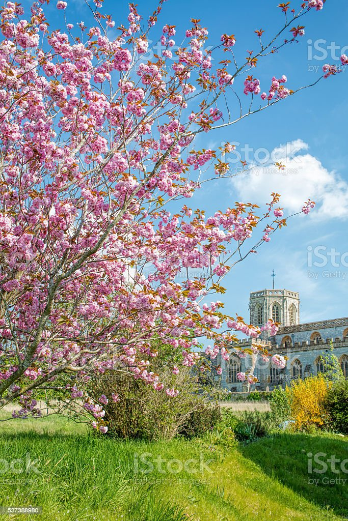 Pink Blossom Tree Garden. Old Church Background stock photo